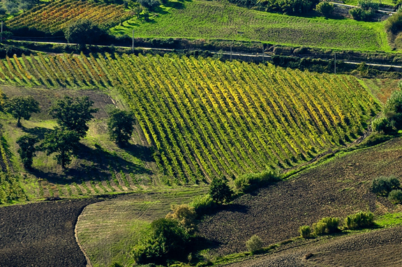 molise vineyards