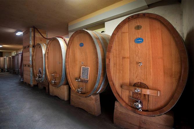 slavonian cask barolo aging